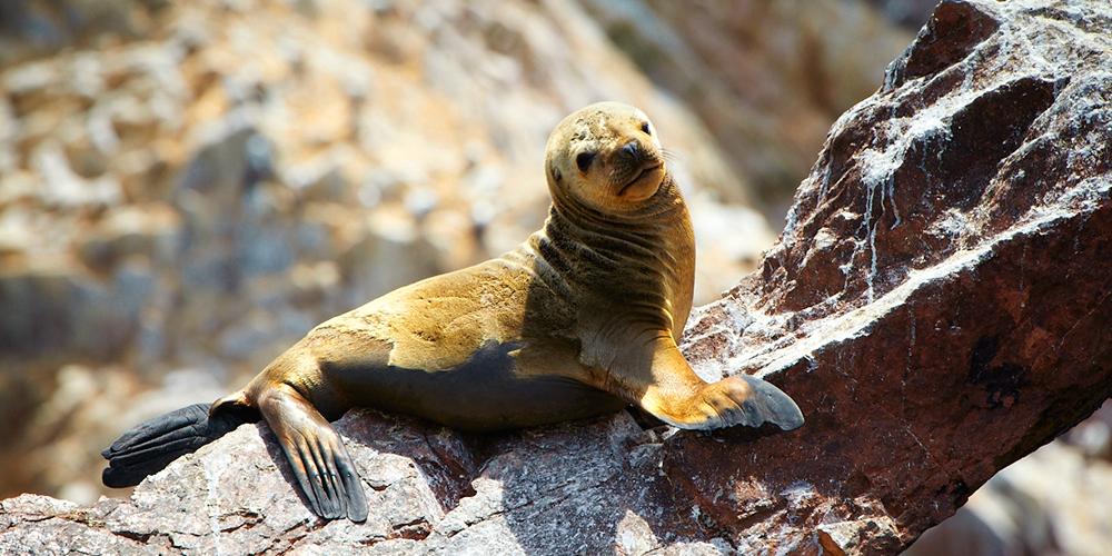 Conoce en un fin de semana la reserva de Paracas