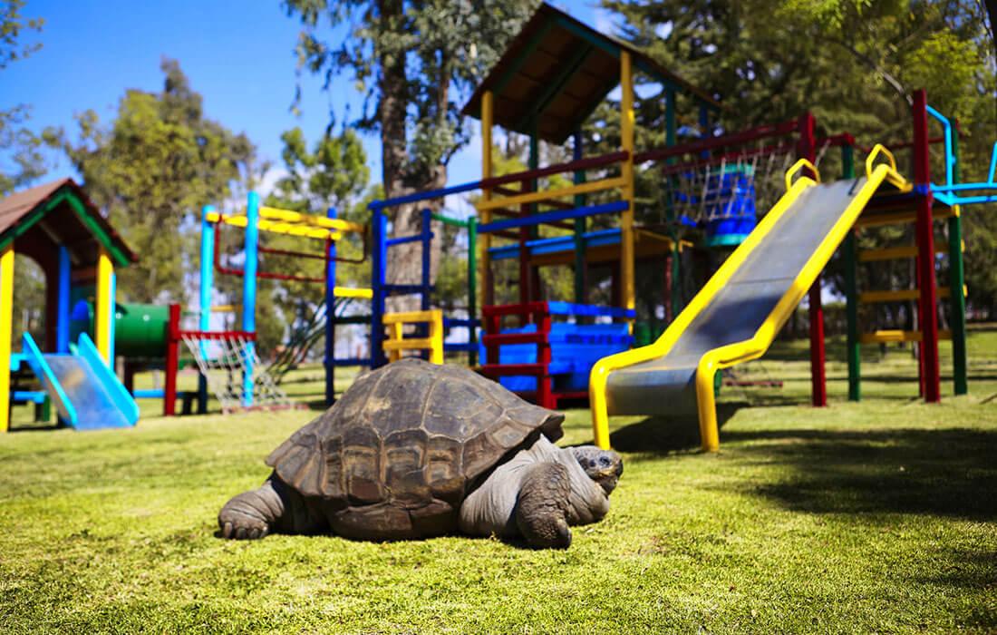 La tortuga Juanita